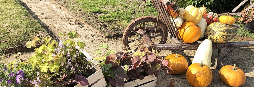 秋の畑仕事