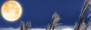中秋の名月 月とススキ