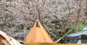 お花見キャンプとバーベキュー